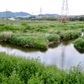 Photos: 内津川と大谷川の合流地点 - 3