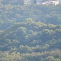 Photos: 弥勒山山頂から見た西高森山 - 2:頂上