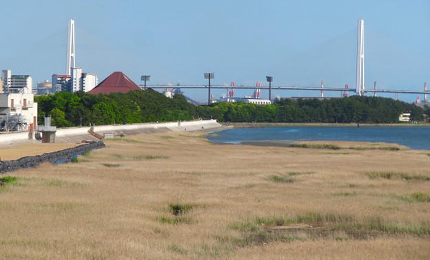 藤前干潟 - 59:ヨシ原と名港中央大橋