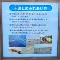 藤前活動センター - 5:干潟のふれあい方