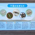 藤前活動センター - 16:干潟の生き物