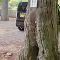 Photos: 尾張富士浅間神社の境内の木にあるミツバチの巣 - 1