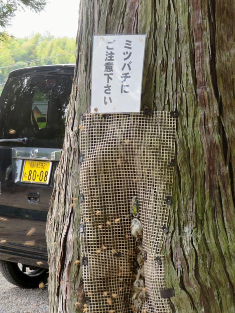 尾張富士浅間神社の境内の木にあるミツバチの巣 - 3