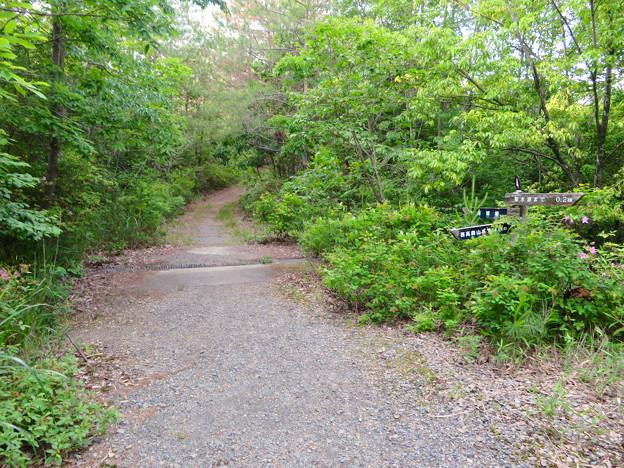西高森山登山道:東海自然歩道春日井コース No.4 の分かれ道 - 3