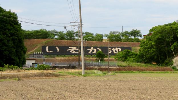 入鹿池南側土手にある「いるか池」の文字 - 1