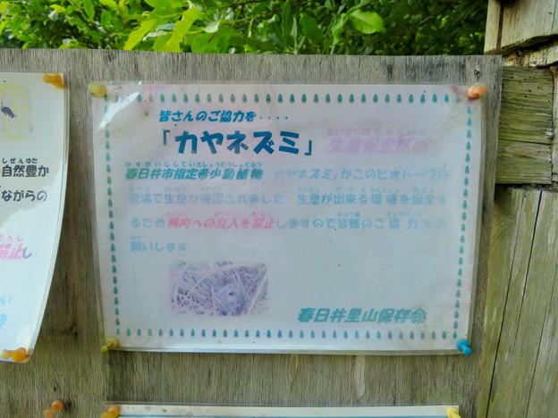 大谷川沿いにあるビオトープ - 6:カヤネズミの生息が確認