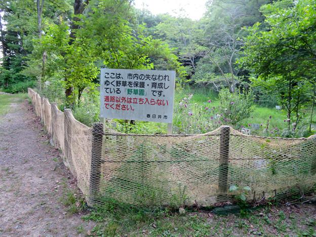大谷川上流 - 14:中州の野草園