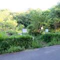 小幡緑地 本園 - 42:トンボ池
