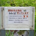 小幡緑地 本園 - 43:トンボ池の注意