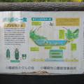 小幡緑地 本園 - 49:ホタルの一生の説明