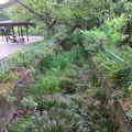 小幡緑地 本園 - 50:ホタルが生息している小川