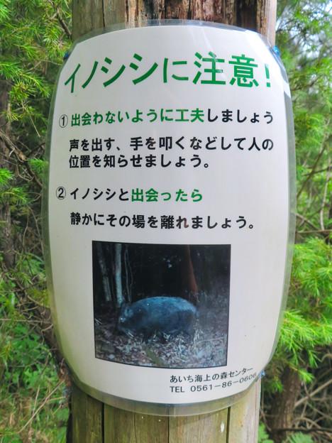 海上の森 - 15:イノシシに注意!