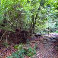 Photos: 海上の森 - 17:あいち海上の森センター遊歩道