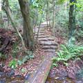Photos: 海上の森 - 18:あいち海上の森センター遊歩道