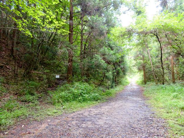 海上の森 - 48:吉田川沿いの道