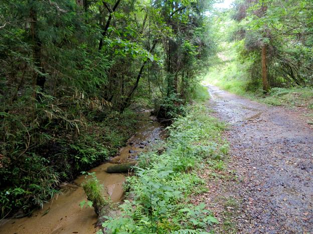 海上の森 - 51:吉田川沿いの道