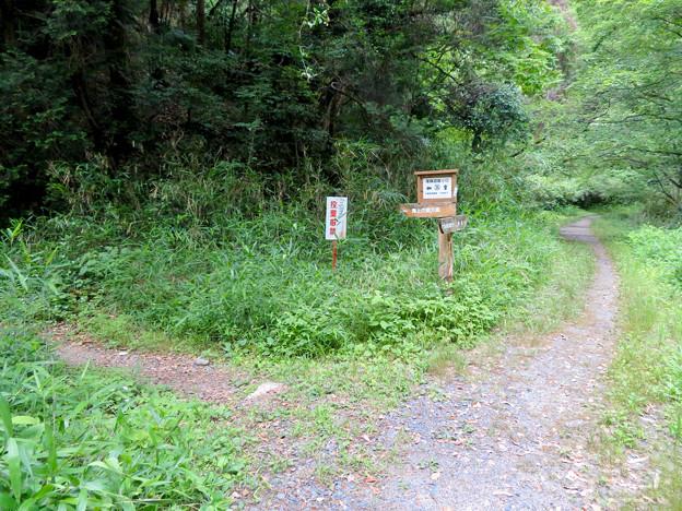 海上の森 - 52:吉田川沿いの分かれ道(尾根道登り口36番)