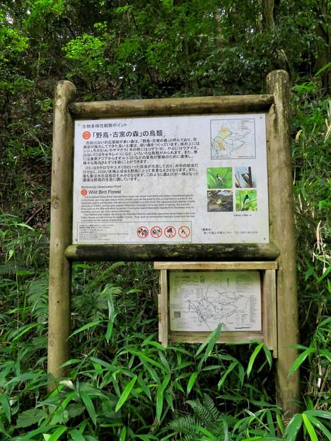 海上の森 - 56:「野鳥・古窯の森」の鳥類