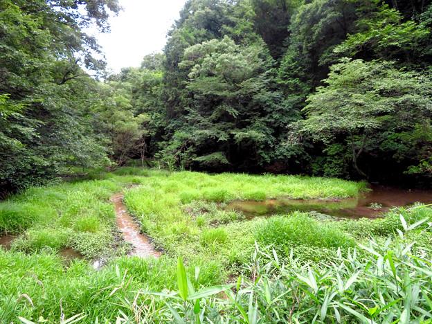 海上の森 - 61:赤池(広久手第二池)