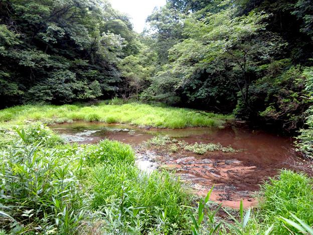 海上の森 - 62:赤池(広久手第二池)