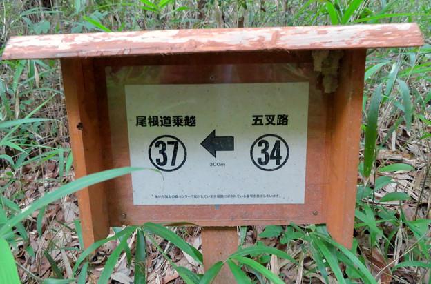 海上の森 - 66:五叉路34番の案内板