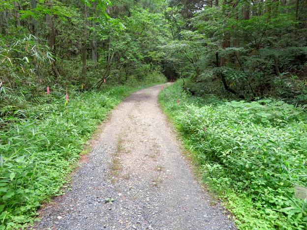 海上の森 - 86:道沿いの植物保護地