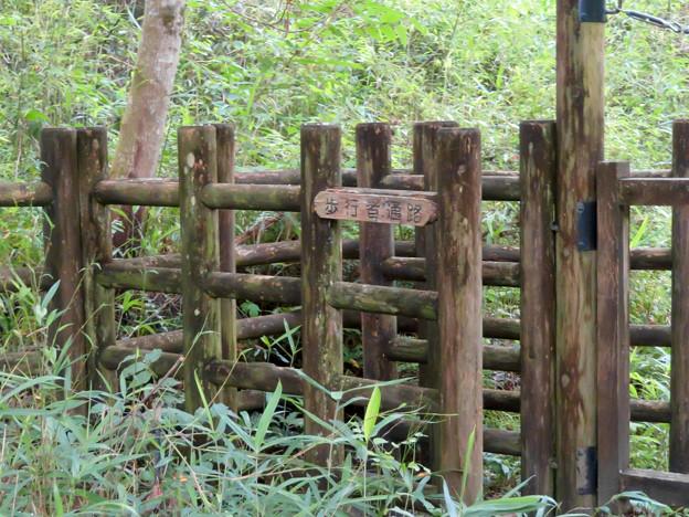 海上の森 - 91:物見山林道分岐3番の森の出入り口