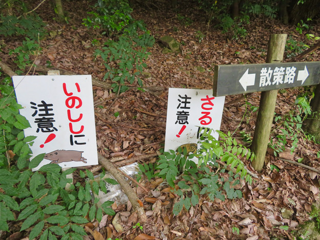 大谷山 - 2:グリーンピア春日井内の登山道入り口の「猪と猿に注意!」の看板