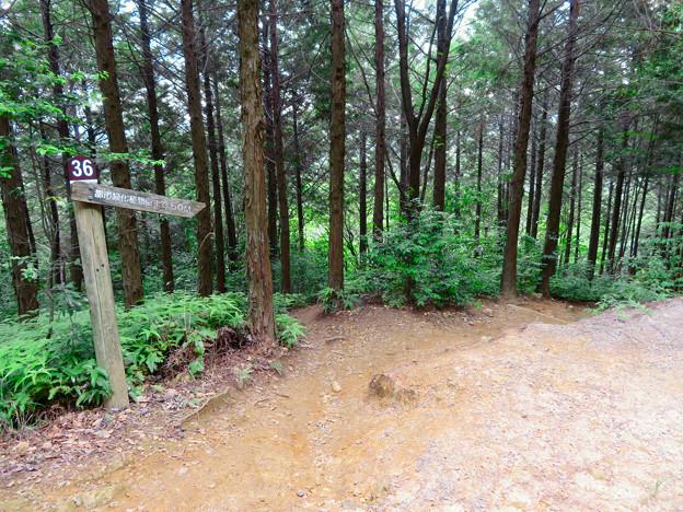 大谷山 - 11:東海自然歩道春日井コース No.36 の分かれ道