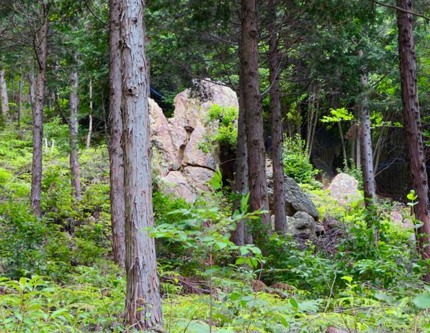 大谷山 - 13:巨大な岩