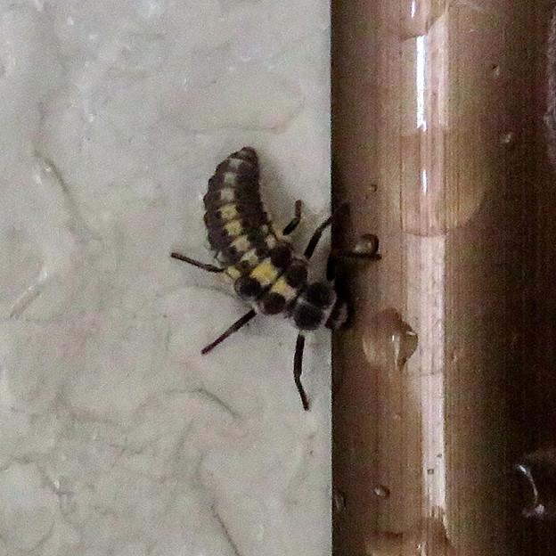 落合公園のトイレにいた小さな…幼虫? - 1