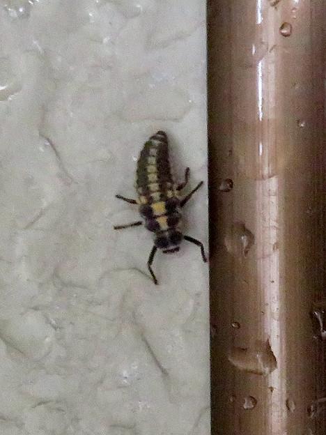 落合公園のトイレにいた小さな…幼虫? - 2
