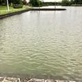 大雨の影響で水かさが増えていた落合公園の落合池 - 1