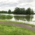 大雨の影響で水かさが増えていた落合公園の落合池 - 8