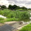 大雨の影響で水かさが増えていた落合公園の落合池 - 9:一部水が溢れてた場所