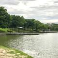大雨の影響で水かさが増えていた落合公園の落合池 - 14