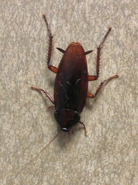 壁にいたゴキブリ - 1
