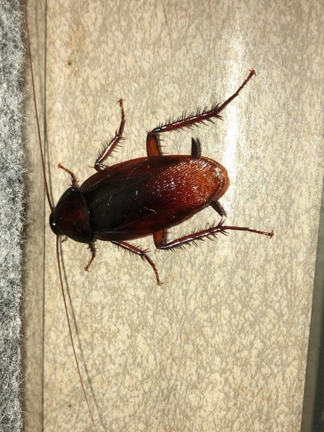 壁にいたゴキブリ - 3