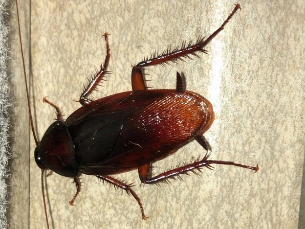 壁にいたゴキブリ - 4