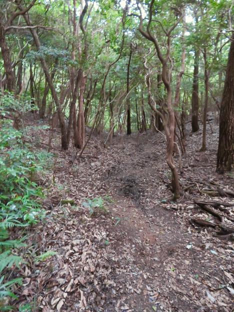 道樹山:柿ノ木川沿いの登山道 - 18
