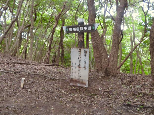 道樹山:柿ノ木川沿いの登山道 - 19(大谷山と道樹山頂上への分かれ道)