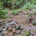 Photos: 弥勒山の麓にある大谷川の源流部 - 1