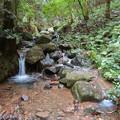 Photos: 弥勒山の麓にある大谷川の源流部 - 3