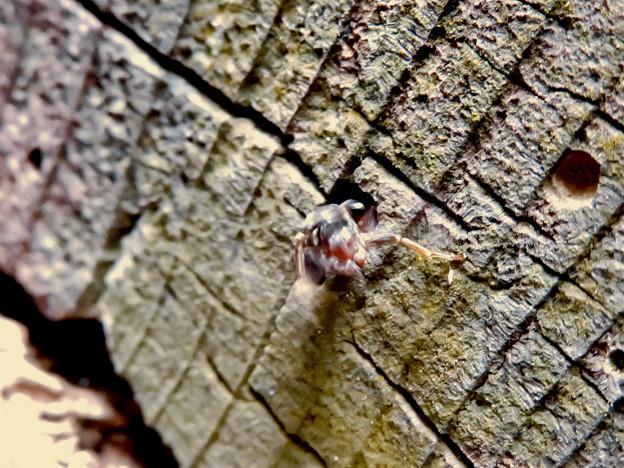 木の小さい穴を巣代わりに使ってる?アリ - 2