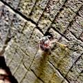 Photos: 木の小さい穴を巣代わりに使ってる?アリ - 2