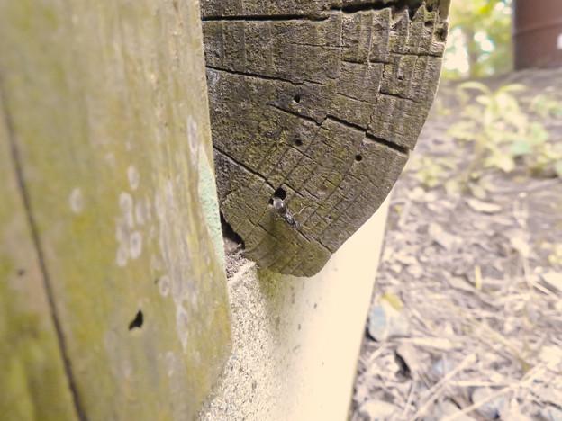 木の小さい穴を巣代わりに使ってる?アリ - 4
