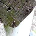 Photos: 木の小さい穴を巣代わりに使ってる?アリ - 9
