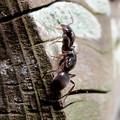 Photos: 木の小さい穴を巣代わりに使ってる?アリ - 12