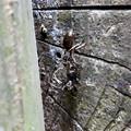 Photos: 木の小さい穴を巣代わりに使ってる?アリ - 15:ケンカ中?