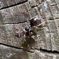 Photos: 木の小さい穴を巣代わりに使ってる?アリ - 16:ケンカ中?